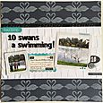 GSM Issue 6 10 Swans a Swimming